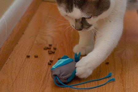 Indoor Hunting Cat Feeder