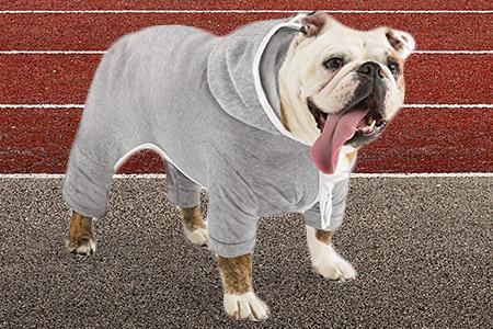 Dog Jogging Hoodie