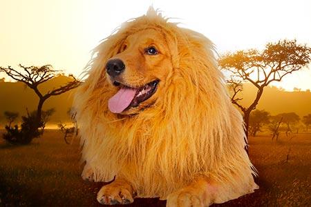 Lion Wig
