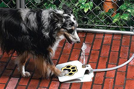 Doggie Drinking Fountain