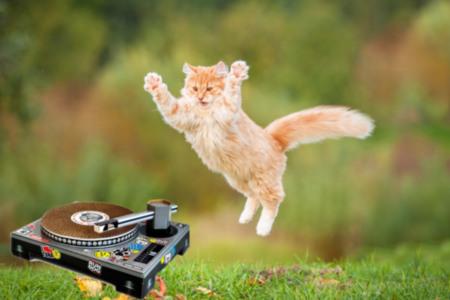DJ Cat Scratch