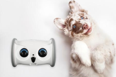 Robot Pet Buddy