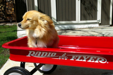 Radio Flyer Speed Wagon